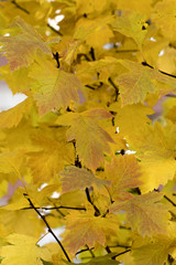 fall on the white background