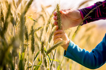 Child and woman holding a ripening ear of wheat