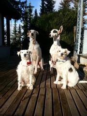 Hunde festlich
