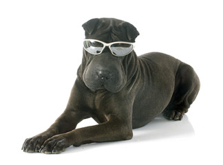 shar pei and glasses