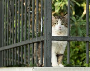Chat derrière des grilles