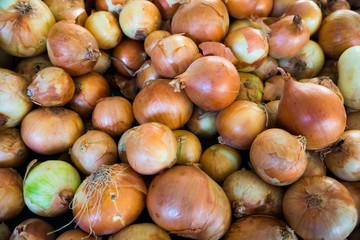 Fresh onion. Ripe onions as background.