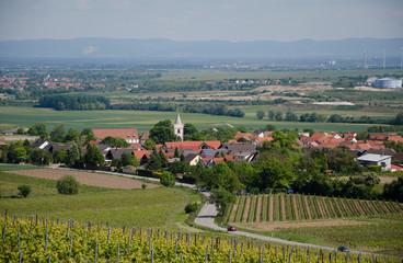 viticulture3