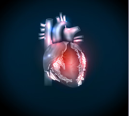 Bright human heart on a blue background