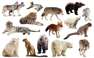 Set of few predators. Isolated over white