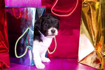 Hundewelpe zwischen Geschenktüten