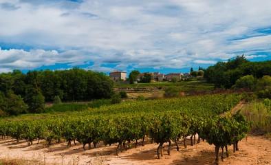 Vignes d'un paysage Ardéchois.