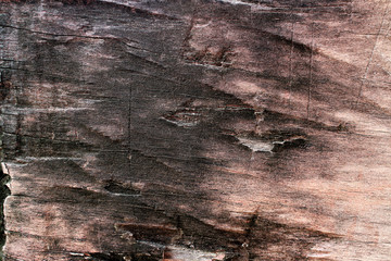 Old, grunge wood panels used as background.
