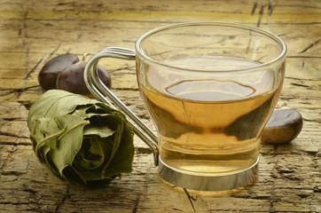Castanea sativa Sweet chestnut Castagno tisana Herbal tea