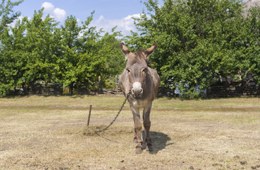 Cute donkey is waiting for the master