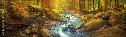 Panoramic view of the forest brook in the mountains - 70532432