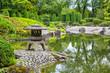 Green pond in Japanese garden