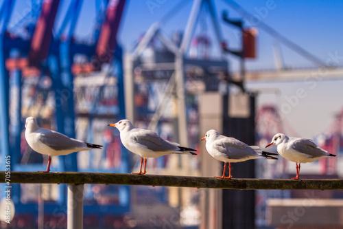 Hamburg, Germany - 70533615