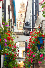 Famos Street Flowers decorated, Cordoba, Spain, Mediterranean Eu