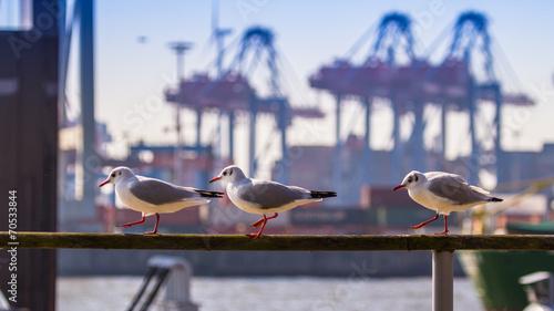 Fotobehang Stad aan het water Hamburg, Germany