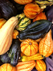 Small pumpkins and gourds for sale in fall.