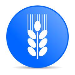 grain internet blue icon