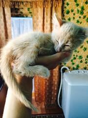 Junger Kater schläft auf einer Hand