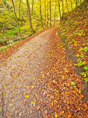 Leinwanddruck Bild Autumnal scene in the forest