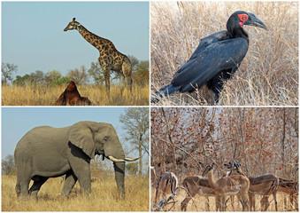 Animals in Krugerpark