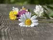 canvas print picture - Blume auf Holzbrett