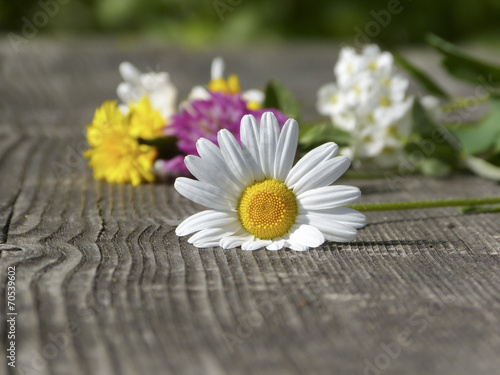 canvas print picture Blume auf Holzbrett