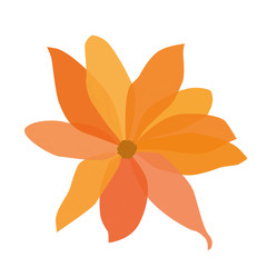 Vector drawing of orange flower isolated