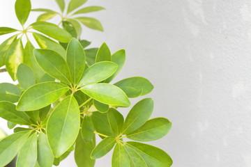 観葉植物 Foliage plant