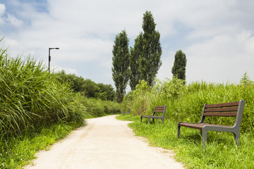 Green meadows and trees with road and empty wooden bench