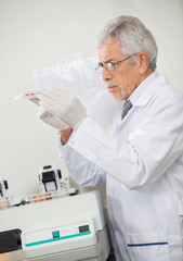 Scientist Examining Microplate