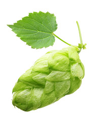 Hop with leaf isolated