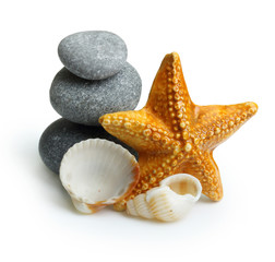 Seastar, stones and seashell.