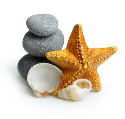 Seastar, stones and seashell.