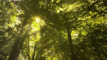 Sunshine in the forest with smoke or fog