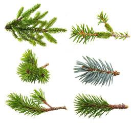 Fir tree branch set