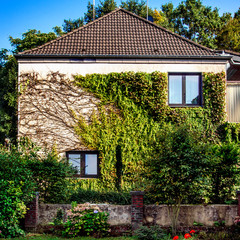 Facade of rural house with ivy