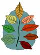 foglie autunnali su sfondo bianco