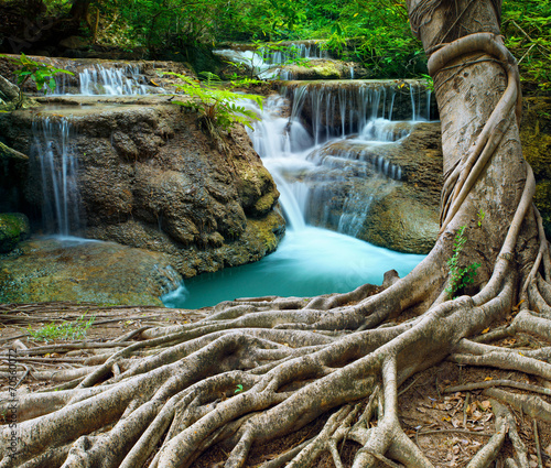Fototapeta banyan tree and limestone waterfalls in purity deep forest use n