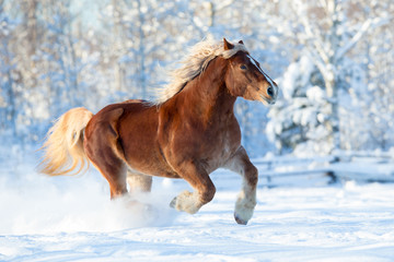 Horse runs on winter background