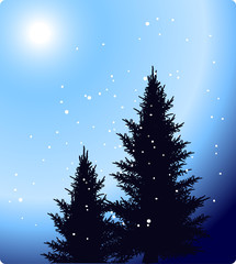 two firs under snow on blue background