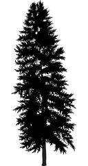 single black fir silhouette on white