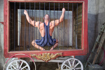 Circus actor sitting on his haunches back in cage for animals