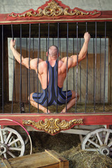 Strongman sitting on his haunches back in cage for animals