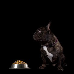 French bulldog sitting on a black background
