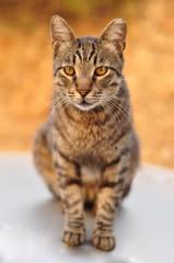 street cat chilling