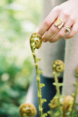 A woman touching the top of a fiddlehead fern.