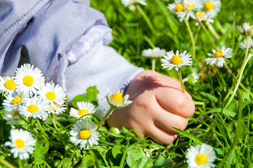 Child Picking Daisies