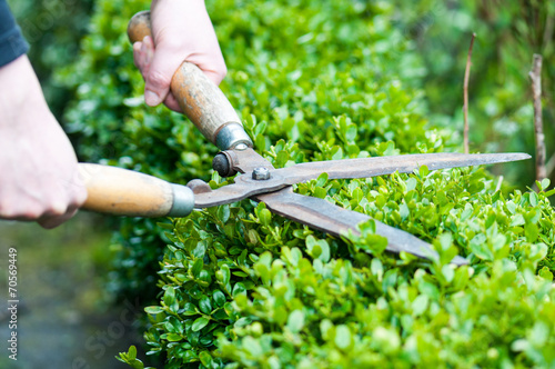 Hedge Trimming - 70569449