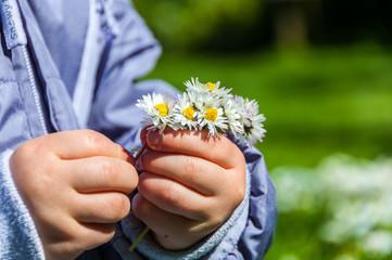 Child Picking Daisies