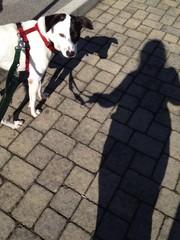 donna con cane e le loro ombre